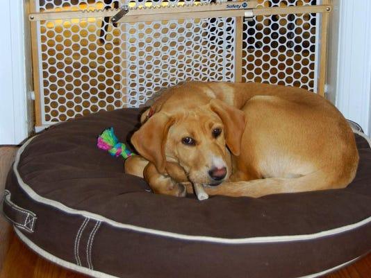 APC f FF fit new puppy 0426