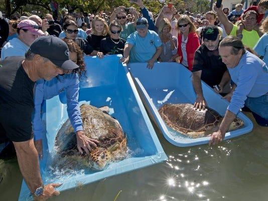 Turtles Release_grue.jpg