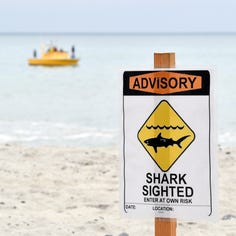 Learn how new shark-detection system works