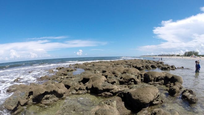 The rock formations at Bathtub Reef Beach in Stuart are the perfect place to see lots of fish, crabs and clams. The rocks along the beach side are good spots for novice snorklers. If you're an avid snorkler, try searching beyond the reef and rocks.