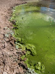 Toxic algae washes onto the northeast shore of Panguitch Lake on Monday, October 1, 2018. Wind carried the majority of the algae into this section of the lake, but the entire lake is still closed to fishing and other recreation.