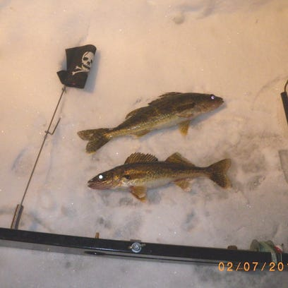 A couple of eater walleye caught by Skip over the last week.