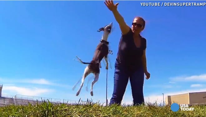 Fifty-two GoPro cameras were used to capture dogs doing their thing.