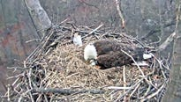According to experts, the clock is ticking on the viability of the remaining egg in the nest documented by the Hanover eagle cam.