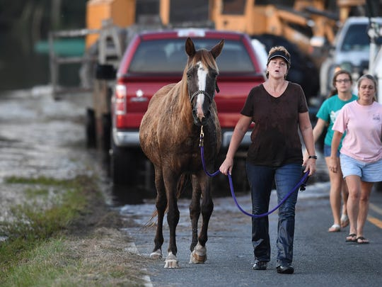 Lorelei Schipke of Loris rescues a horse trapped in flood waters for the Marion County Animal Shelter off of Bay Road in Brittons Neck on Thursday. Hurricane Matthew has caused flooding in the Pee Dee region. Thursday, October 13, 2016.