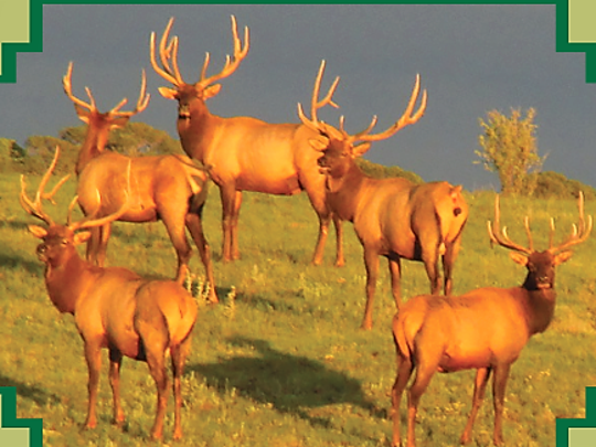 Mathew Midgett also captures New Mexico's wildlife on his rides.