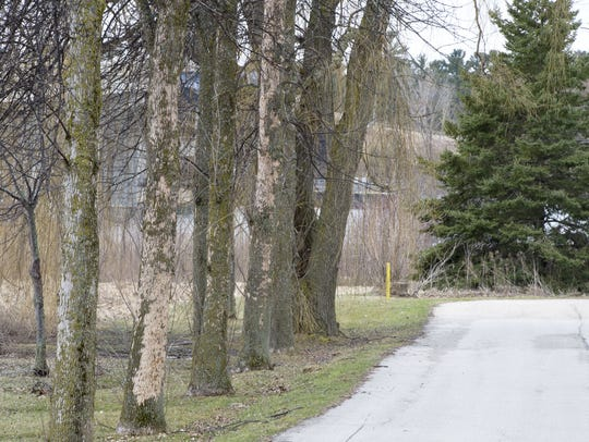 Emerald ash borers have infested ash trees near the