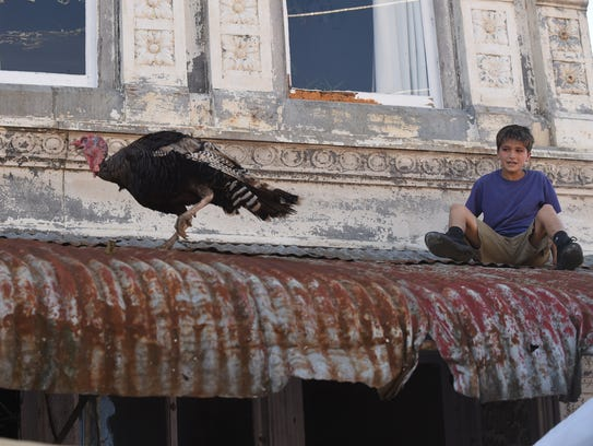 A young boy chases a turkey on a rooftop in downtown