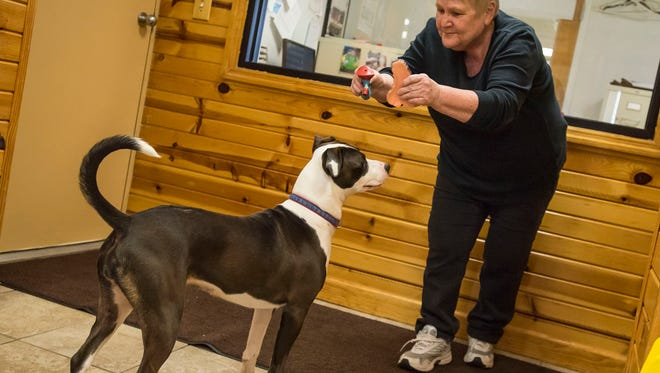St. Clair County Animal Control volunteer Pat Hendra plays with Lindsay, a 1-year-old pitbull-terrior mix at the St. Clair County Animal Shelter Friday, March 16.
