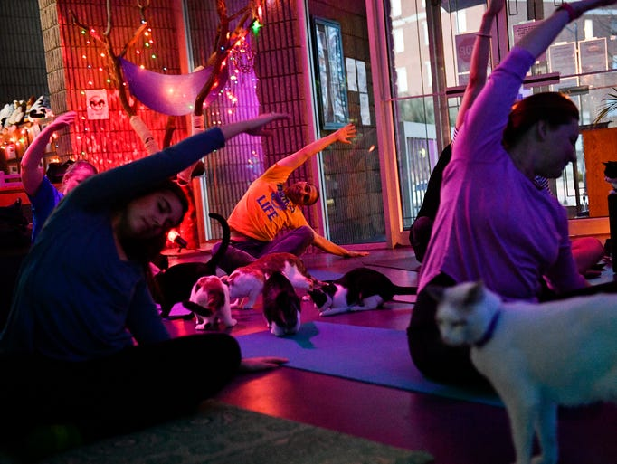 People at the Organic Cat Cafe participate in a yoga