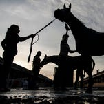 Belmont Stakes contender Conquest Curlinate, front, receives a bath after a morning workout Sunday at Churchill Downs. May 24, 2015.