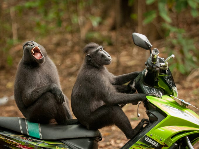 This is one of the many images in the The Comedy Wildlife