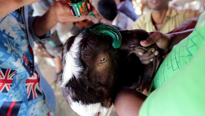 An Indian man paints a goat's horns as he prepares the animal for sale outside the Jama Masjid mosque on the eve of the Eid Al-Adha festival in Delhi, India, on September 12, 2016.