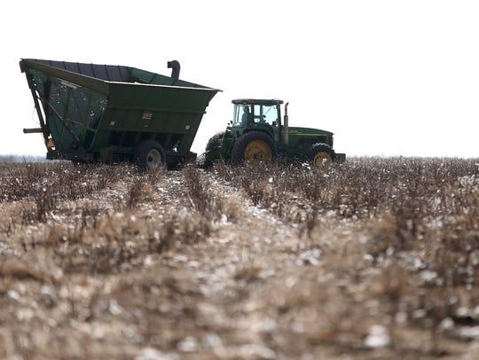 Local farmers help strip the cotton crop of Colin Klattenhoff