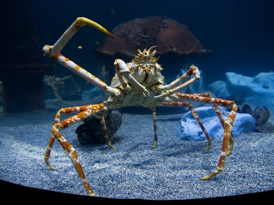 Several crabs are visible in a tank that also features