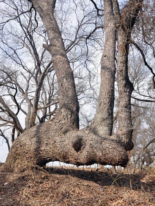 636334852608208749-comanche-marker-tree.jpg