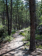 Trees grow tall around a trail near Lake Como north of Darby.