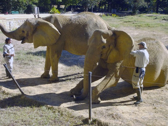 In this Oct. 5, 2010, file photo, elephant keepers
