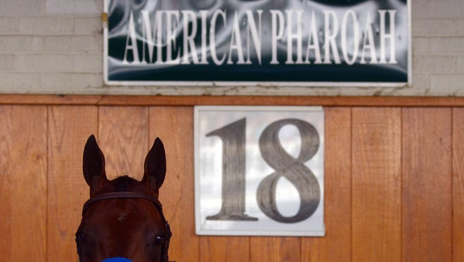 LOUISVILLE, KY - JUNE 13:  American Pharoah stands in his stall in the paddock at Churchill Downs on June 13, 2015 in Louisville, Kentucky.