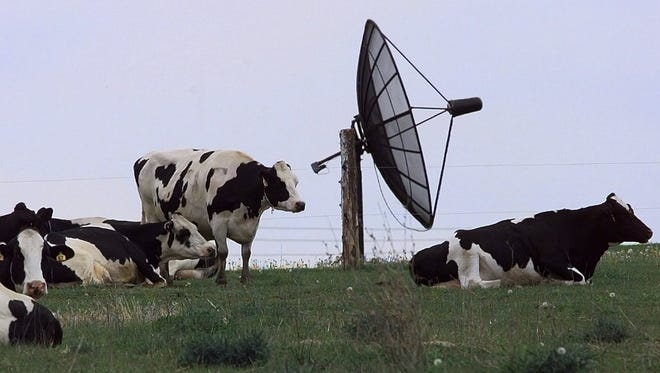 Cows graze in a Georgia pasture as a nearby satellite dish pulls in television signals from 22,000 miles above the earth. Photographed May 28, 1999.