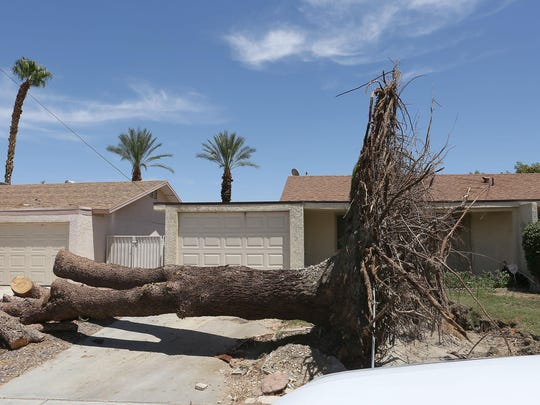A large uprooted tree at a home in the Palm Desert Country Club after Thursday's storm damaged the area.