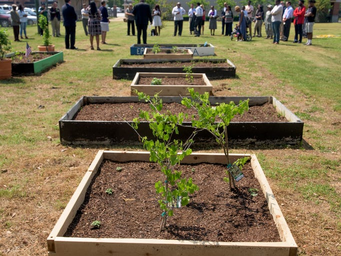 Alabama State University Plants Ww1 War Garden