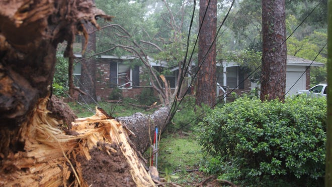 A large pine fell and did damage on a house near Mahan and Blair Stone