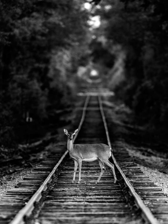 BEST IN SHOW2016 - Deer on a Railway Track, Mohan Krishna