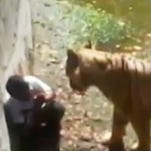 White tiger kills zoo visitor in India