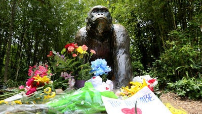 A makeshift memorial for Harambe, the lowland gorilla killed at the Cincinnati Zoo, sits outside the gorilla exhibit.