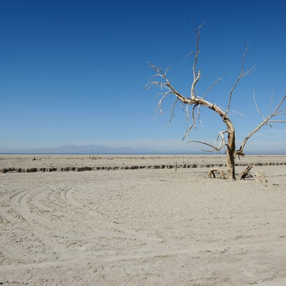 A dead tree protrudes out of the dry shoreline in Red