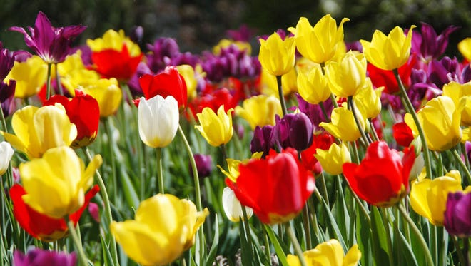 Bulbs are always a welcome sight in spring.
