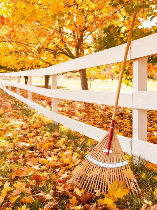 Wood fence, bamboo rake and yellow maple leaves in autumn
