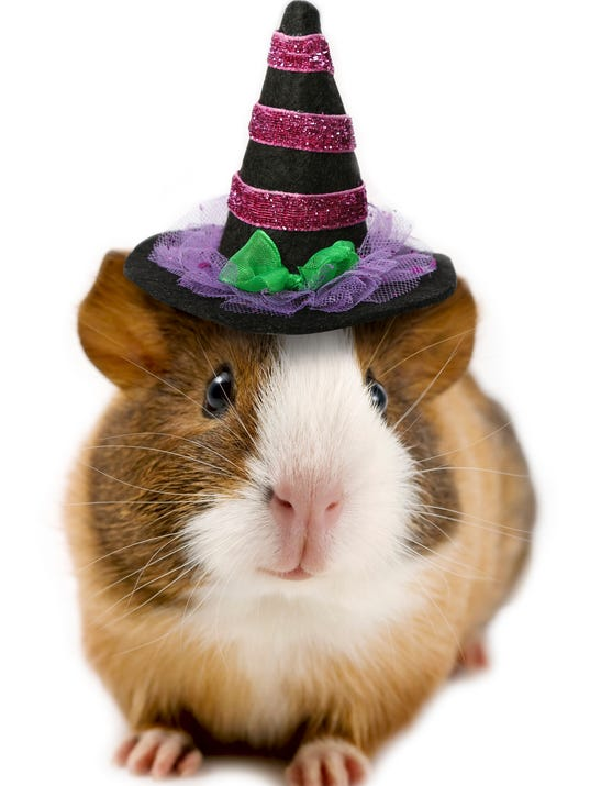 Pet Halloween Outfits
