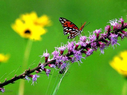 -Wildflower_One5bwrn7cic4ozns261za.jpg_20061024.jpg