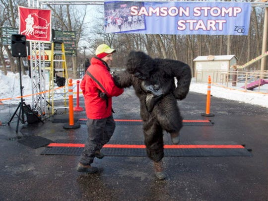"Dave Finch, race director, has a quick dance with ""Samson"" before the start of the 5K Samson Stomp and Romp: at the Milwaukee County Zoo."