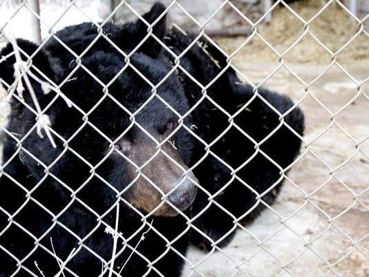 Pet Bear Permit
