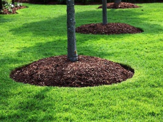 Mulch Circles