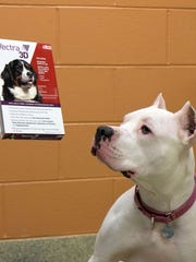 A dog at the Humane Society of Huron Valley takes a