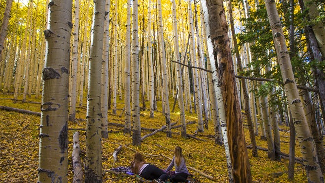 Kendall Rasmussen (left) and Natalie Smith, both 21-year-old NAU students, take a break in a grove of aspens at Lockett Meadow near Flagstaff, Ariz. October 11, 2016.