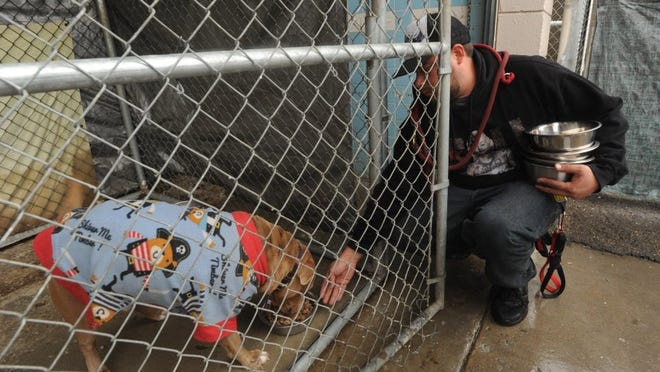 Santa Paula Animal Rescue Center employee Javier Garcia feeds one of the dogs at the facility in Santa Paula on a rainy day in 2015.