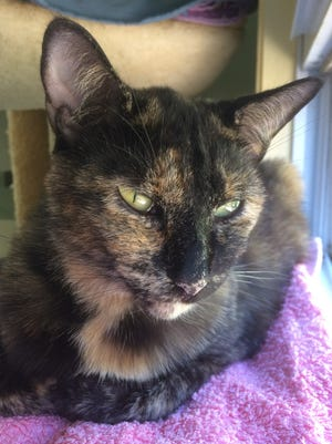 I'm a very lovely four-year-old gal, with tortoiseshell fur and a purr that will melt your heart.