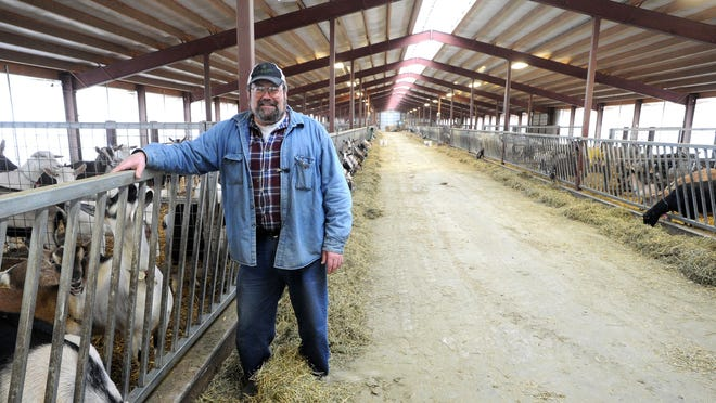 Larry Hedrich of LaClare Farms, a family-owned goat farm outside Pipe at Highway 151 and County Highway HH, stands in the barn with hundreds of goats that get milked each day. The LaClare operation produces award-winning goat milk and cheese and features a cafe and gift shop.