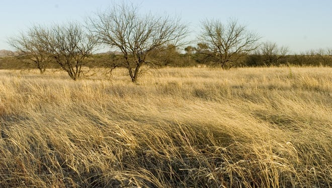 The grasslands of Buenos Aires National Wildlife Refuge.