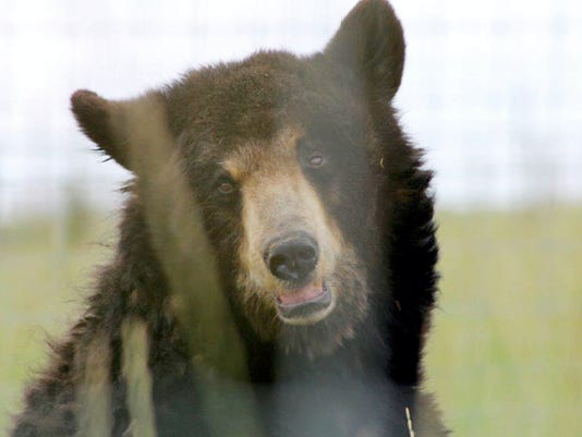 Ricki the bear