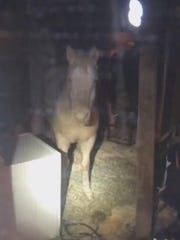 Inver Grove Heights police found a pale-colored horse inside the home.