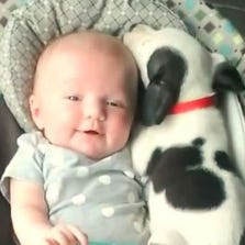 An adorable encounter between a baby and a pit bull puppy is warming hearts across the world.