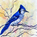 The blue jay is just one of the more than 700 bird species profiled in the Birds of North America Online subscription site.