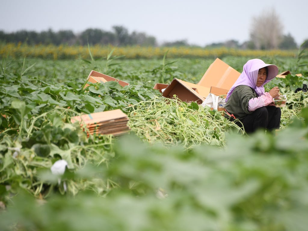 A woman takes a break as she works in a watermelon field during Stage 8 of the Silk Way Rally 2017 between Karamay and Urumqi, China.