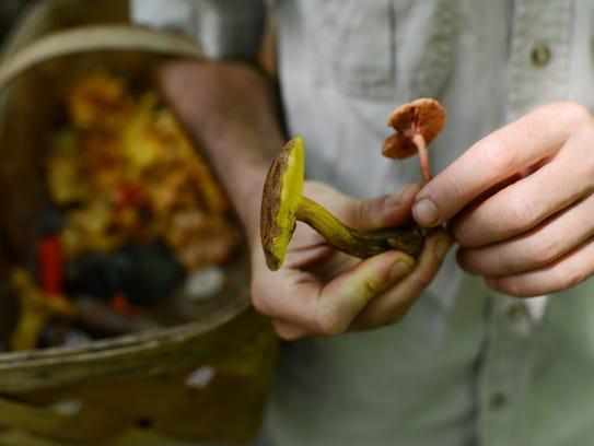 Mushroom forager Alan Muskat holds mushrooms in 2013.